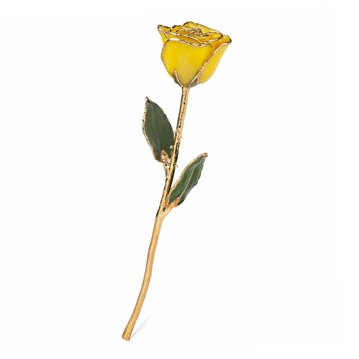 24K Gold Trimmed Forever Rose with Yellow Petals. View of Stem, Leaves, and Rose Petals and Showing Detail of Gold Trim