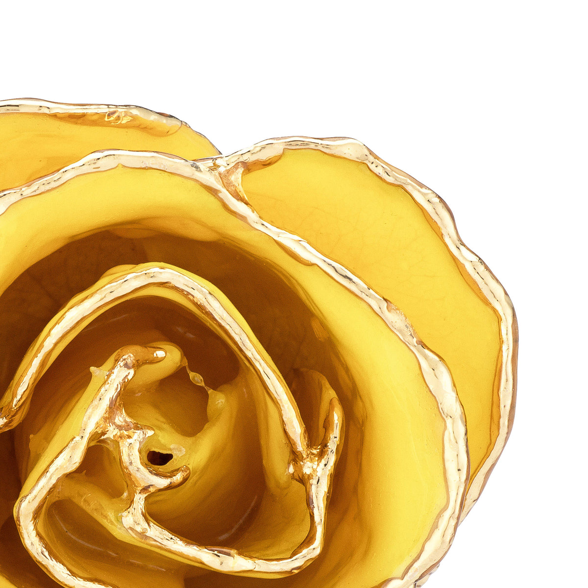 24K Gold Trimmed Forever Rose with Yellow Petals. View of Stem, Leaves, and Rose Petals and Showing Detail of Gold Trim. zoomed in view from top.