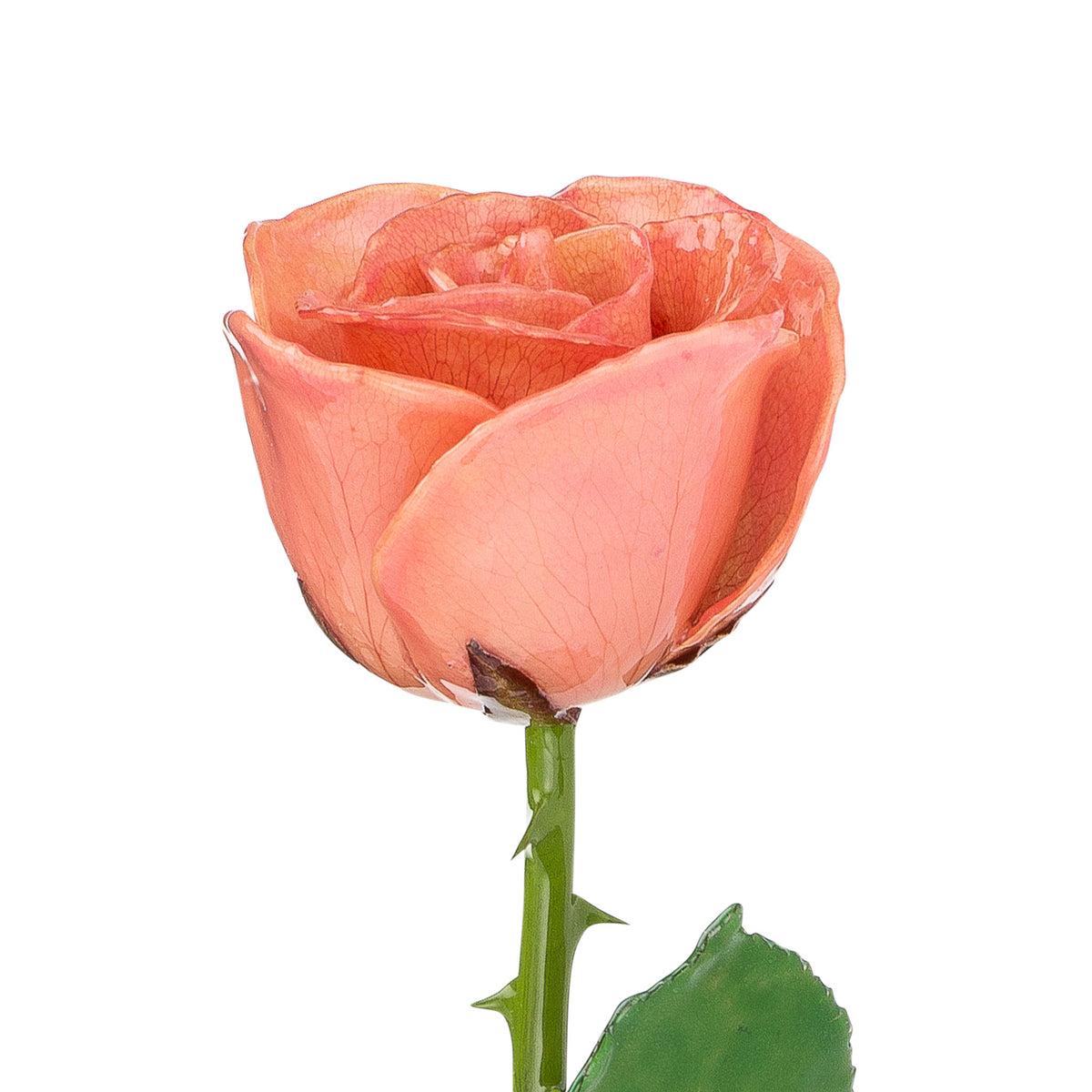 Natural (Green Stem) Forever Rose with Pink Colored Petals. View of Stem, Leaves, and Rose Petals. This a Forever Rose without any gold or other precious metals on it.