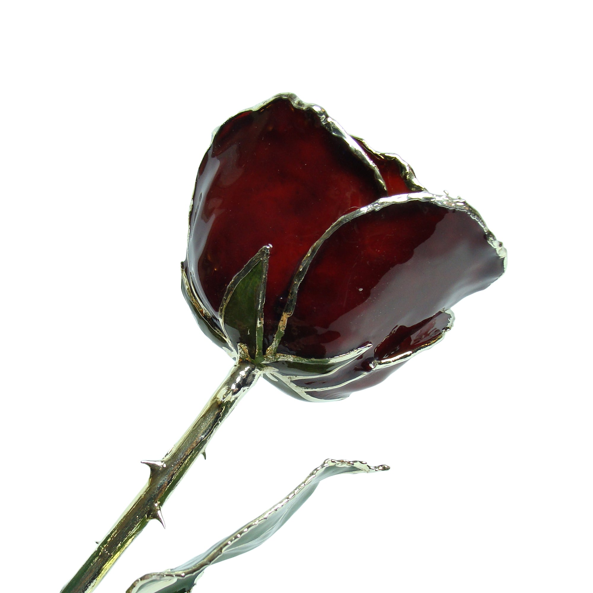 Silver Trimmed Forever Rose with Burgundy Petals. View of Stem, Leaves, and Rose Petals and Showing Detail of Silver Trim