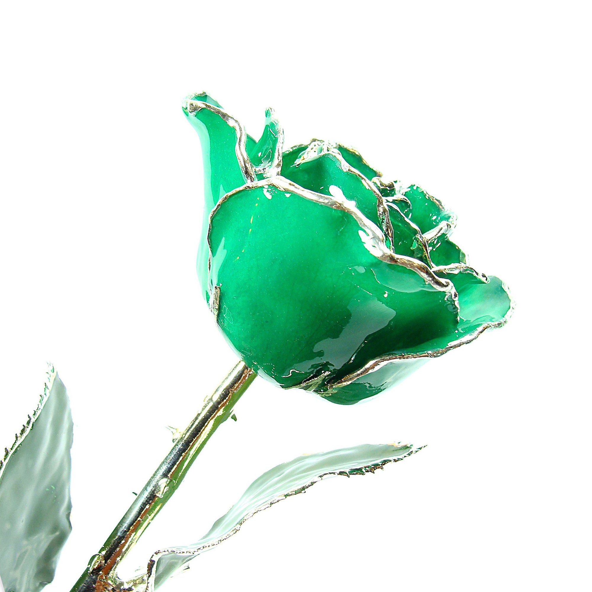 Silver Trimmed Forever Rose with Green Petals. View of Stem, Leaves, and Rose Petals and Showing Detail of Silver Trim