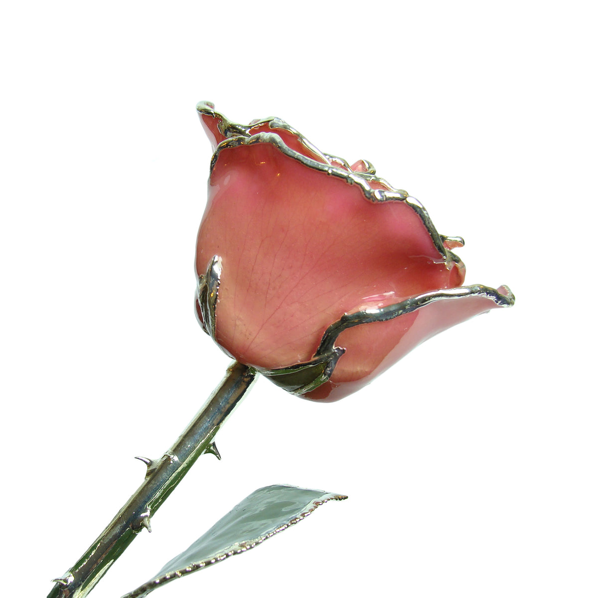 Silver Trimmed Forever Rose with Pink Petals. View of Stem, Leaves, and Rose Petals and Showing Detail of Silver Trim