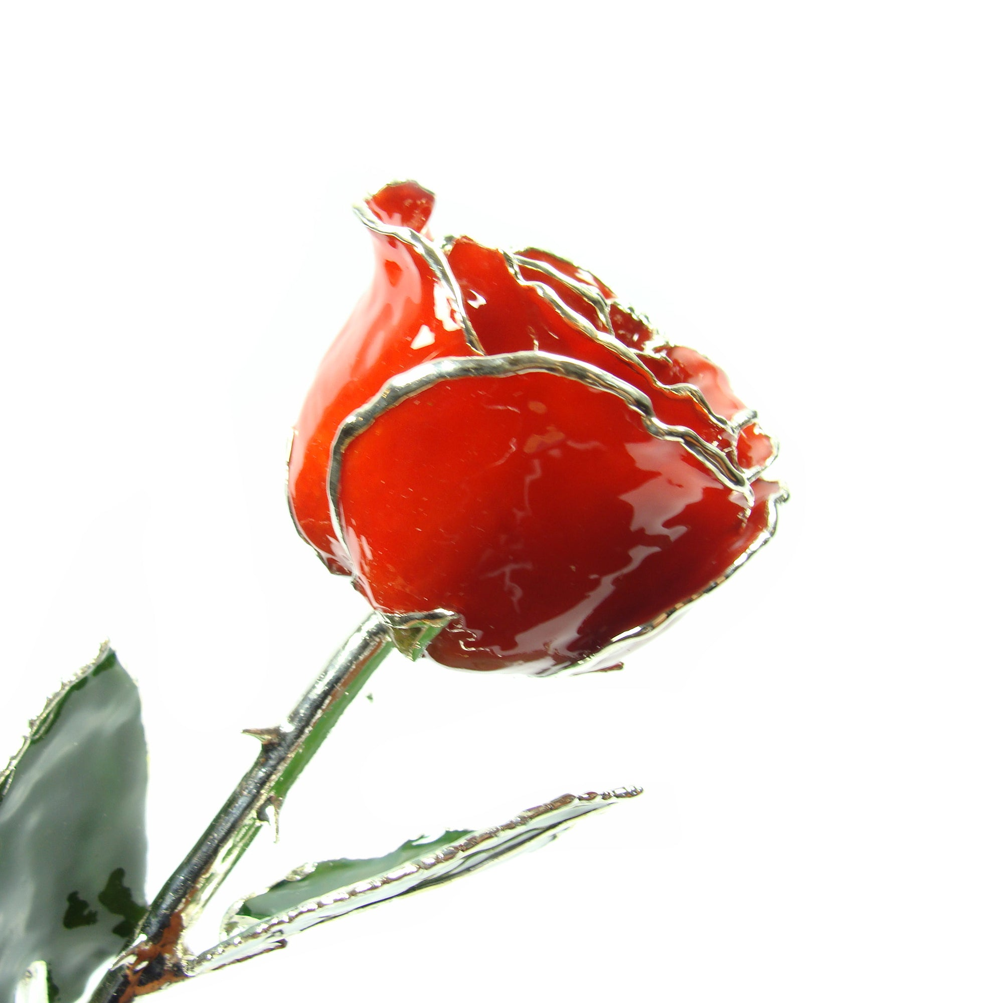 Silver Trimmed Forever Rose with Red Petals. View of Stem, Leaves, and Rose Petals and Showing Detail of Silver Trim