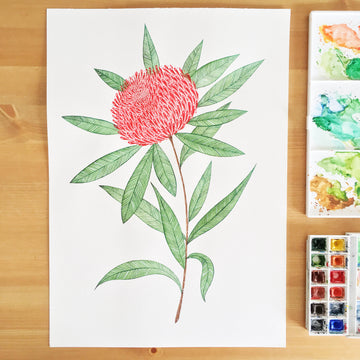 Andrina Manon Waratah Watercolour Art Print