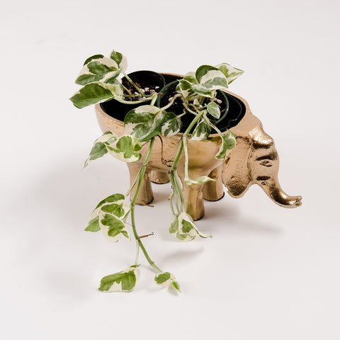 Elephant Planter - New Bronze
