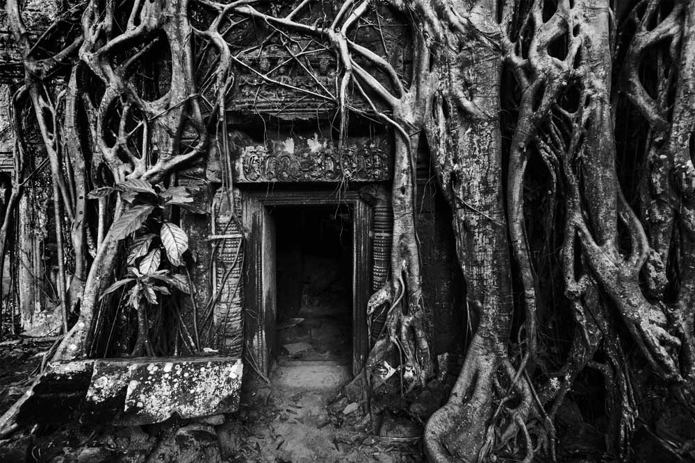 World Heritage (Black and White) - Ta Prohm Temple Ruins, Angkor Wot, Cambodia (#AA_WHBW_04)