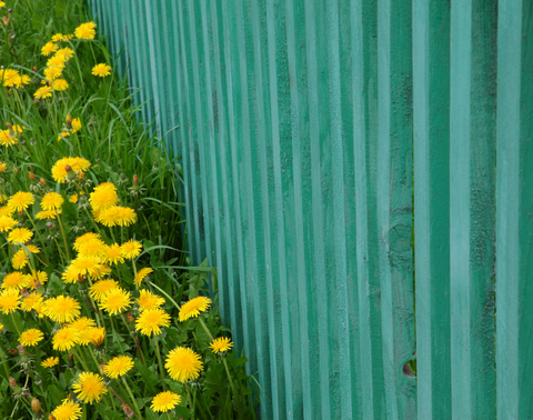 Colored fence line