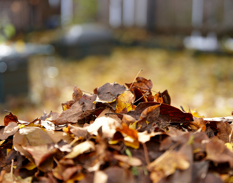 Cleaning leaves