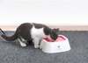 Pet Non-Spill 1.0L Water Bowl Dispenser