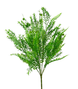 "Groundsel Bush x 7 17"" H"