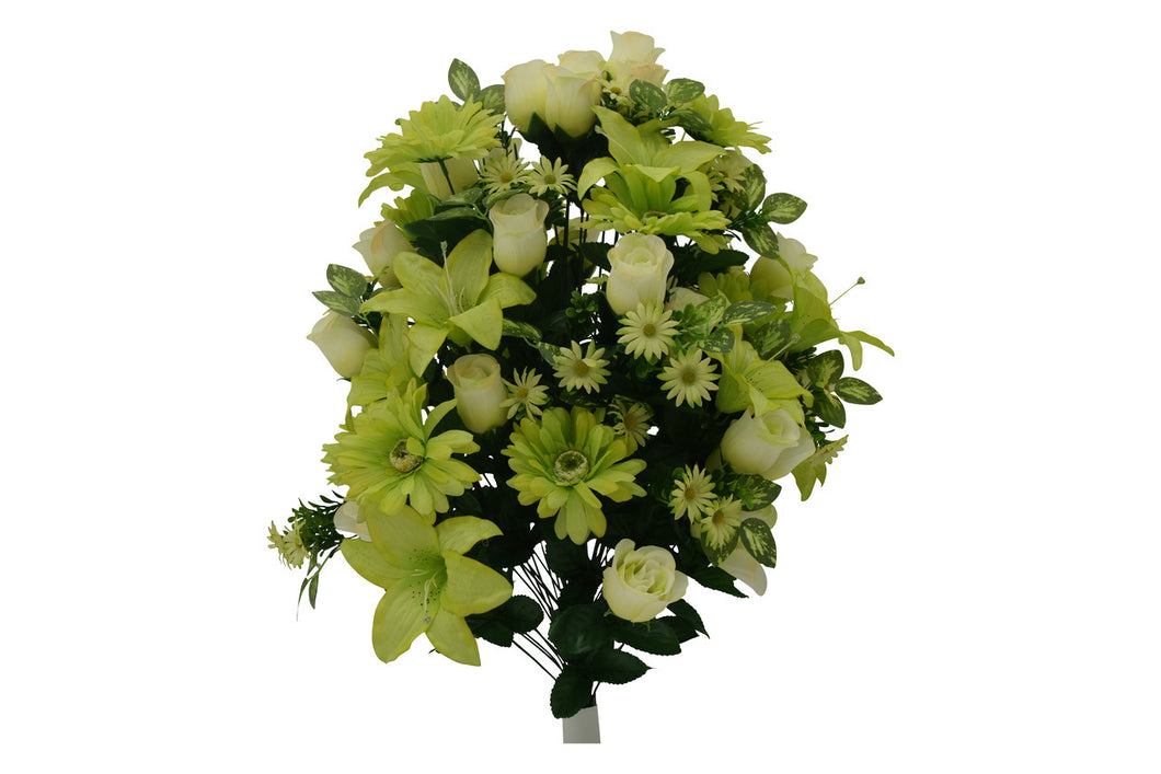Lime Green Lily Rose Bush