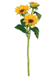 SUNFLOWER STEM