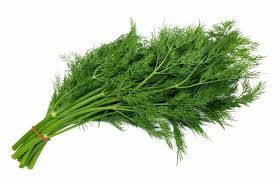 Herb Dill 1 bunch