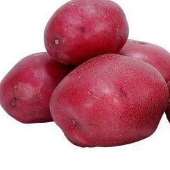 Potato 'B' Red 1lb. (average 5 per pound)