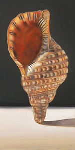 'Standing Shell' by Nancy Egan Graphic Art on Wrapped Canvas EJ500