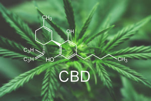 CBD Informational Session at Gloversville Public Library - Sat, February 29 1 PM-2 PM