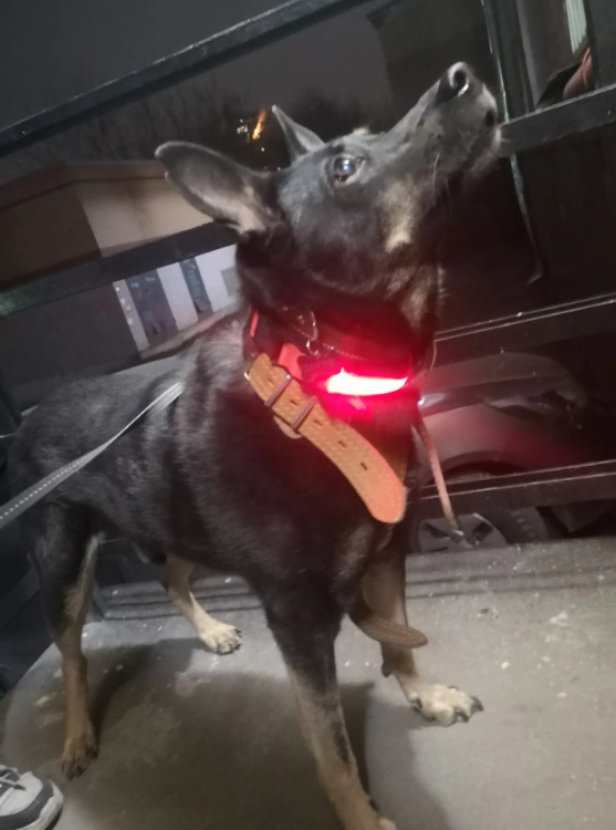 Pawppy LED Dog Collar customer picture Pawppy Mypawppy
