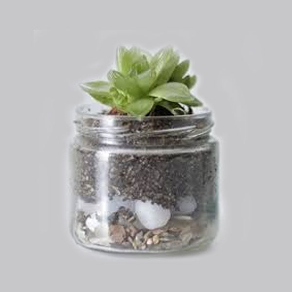 Load image into Gallery viewer, Zen Bottle Plant - FOXBOXSTORES