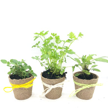 Load image into Gallery viewer, Mini Grow Kit - eco-party-place