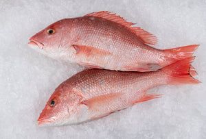 "Fresh Wild Gulf Red Snapper  (4lb Whole Fish) $14.00lb  ""Jimmys Favorite"""