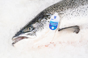 Fresh Loch Duart Scottish Salmon (10lb Whole Fish) $11.00lb