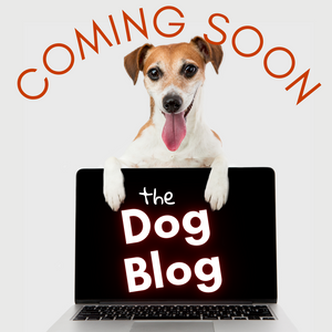 The Dog Blog is Coming Back Soon!