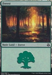 Forest (64) [Duel Decks: Elspeth vs. Kiora] | Mothership Books and Games TX