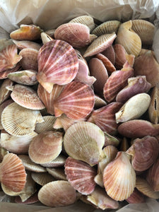 Swimming Scallops (Whole)