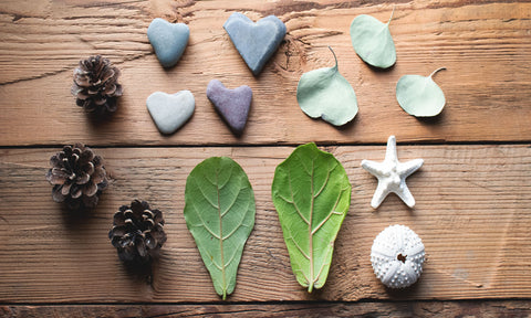 leaves and shells from nature