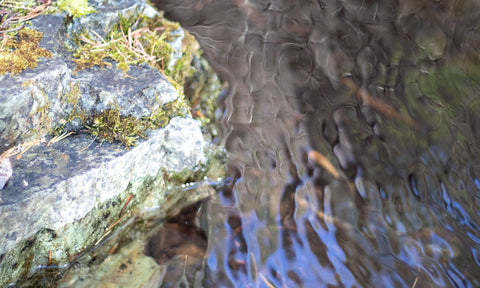 mossy rock with ice