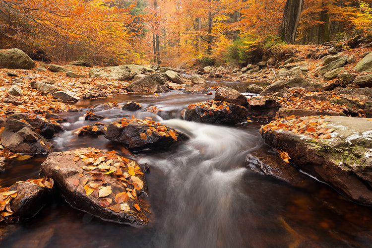 A long exposure image of a small stream flowing through a rocky bed covered in leaves. Thick mid autumn trees line the stream.