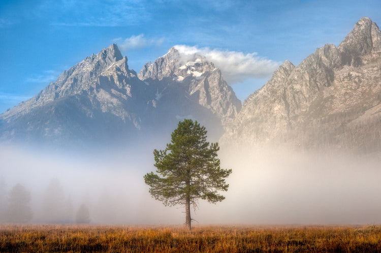 An image of a single tree in a field with huge rocky mountains behind it separated by a think layer of fog