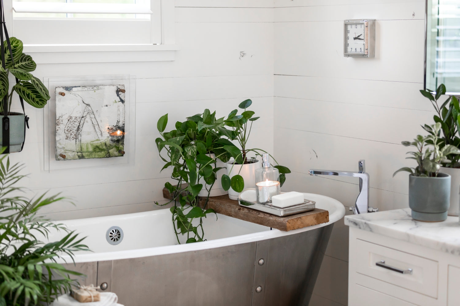 Best Plants for the Bathroom & Tips for Styling Them