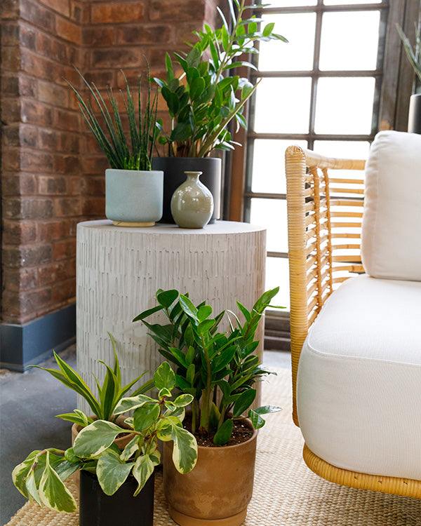 Large potted plants on ground next to end table with plants atop.