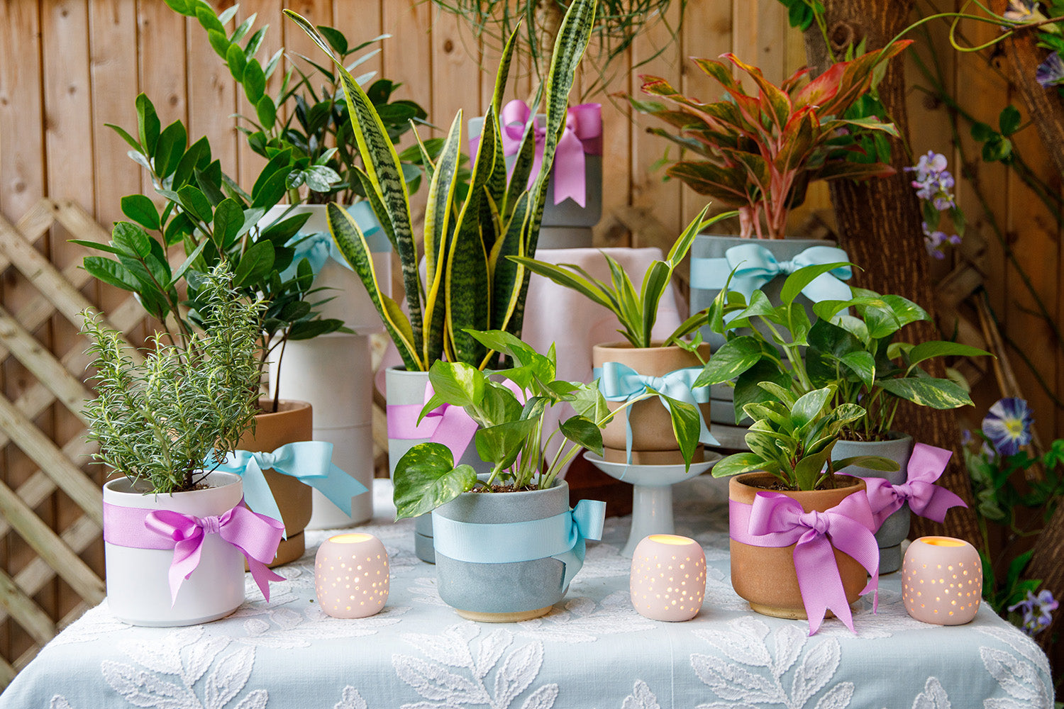 Houseplants displayed on a a table.