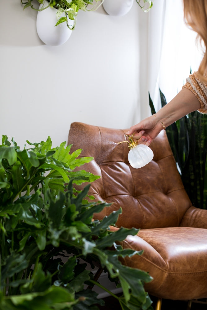 Woman misting a philodendron