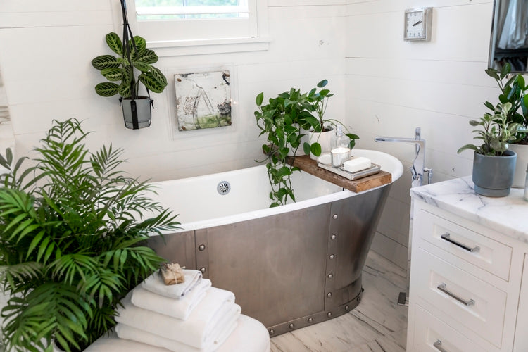 Bathroom with houseplants