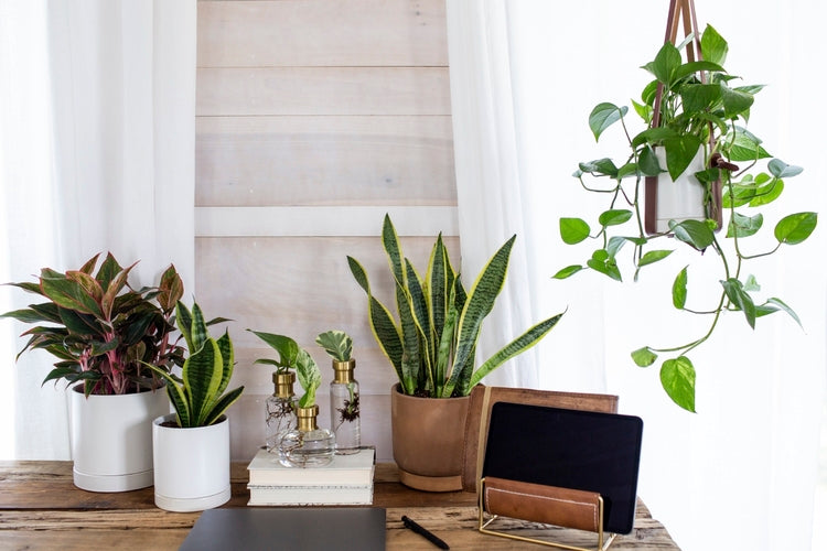 Houseplants on work desk