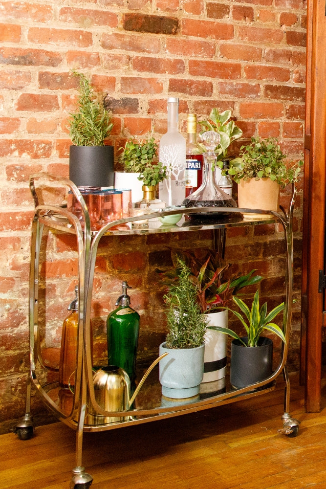 Herbs and houseplants warm up (and spice up) your environment