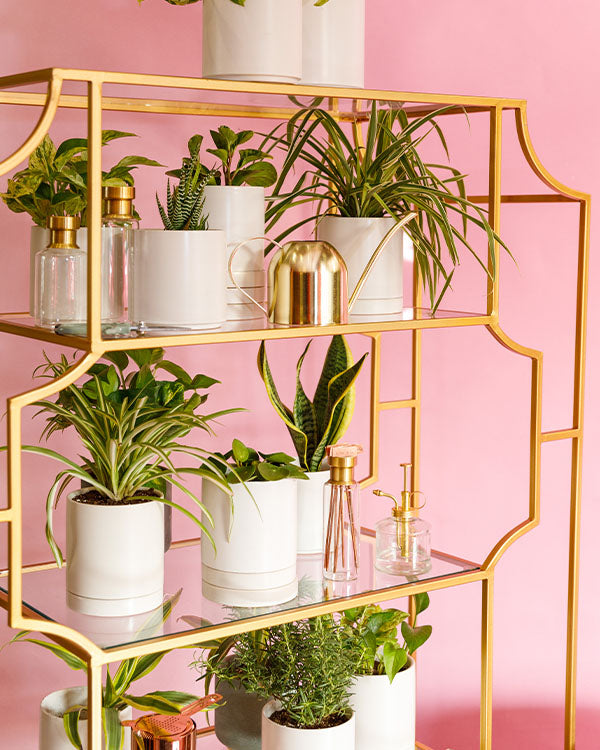 Houseplants on shelves.