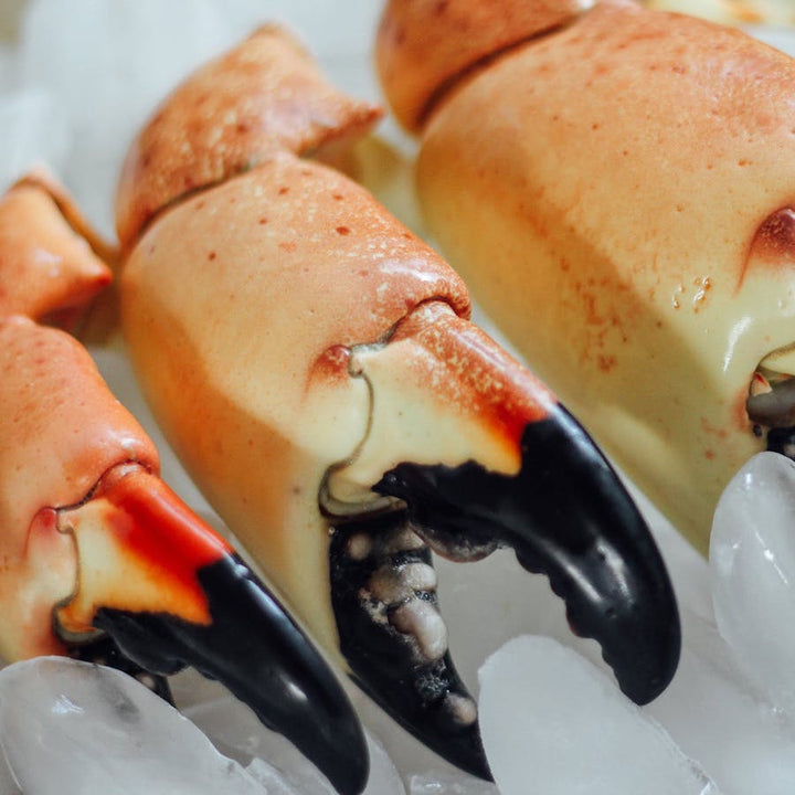 Fresh Florida Large Stone Crab Claws - Mobile Gourmet Foods