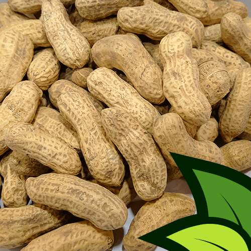 Parachanar Peanuts (Mong Phali Shelled) - Organic Co