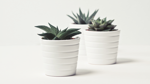 Can indoor plants can help you cope with rheumatoid disease?