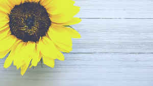 Sunflowers for hidden disability assistance at Heathrow airport