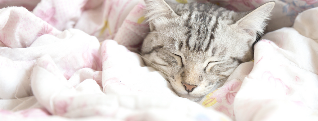 grey cat snoozing in some pink blankets.