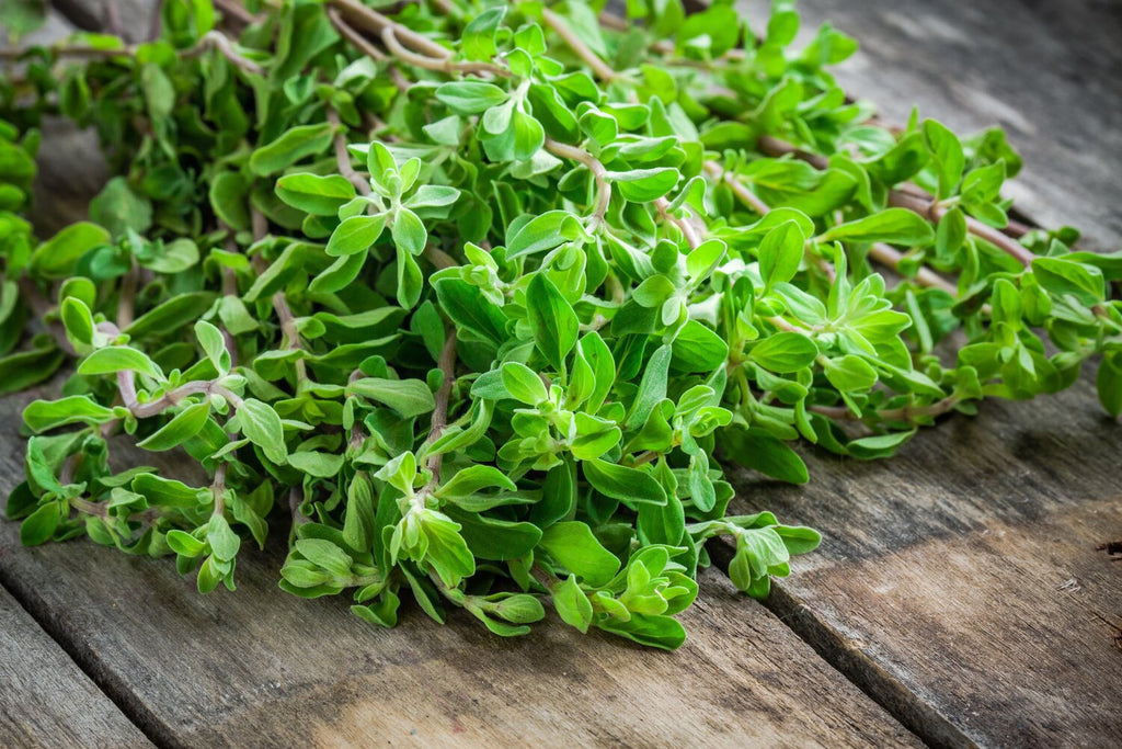 Marjoram  Herb, Herbs Herb Magnificent Marrow