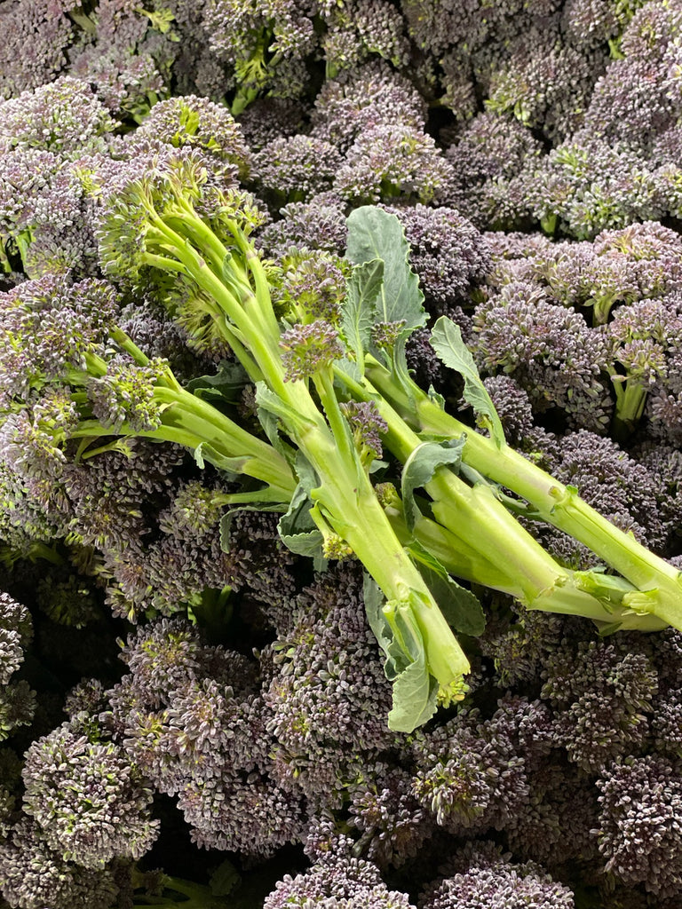 Norfolk Purple Sprouting Broccoli  broccoli Broccoli Magnificent Marrow