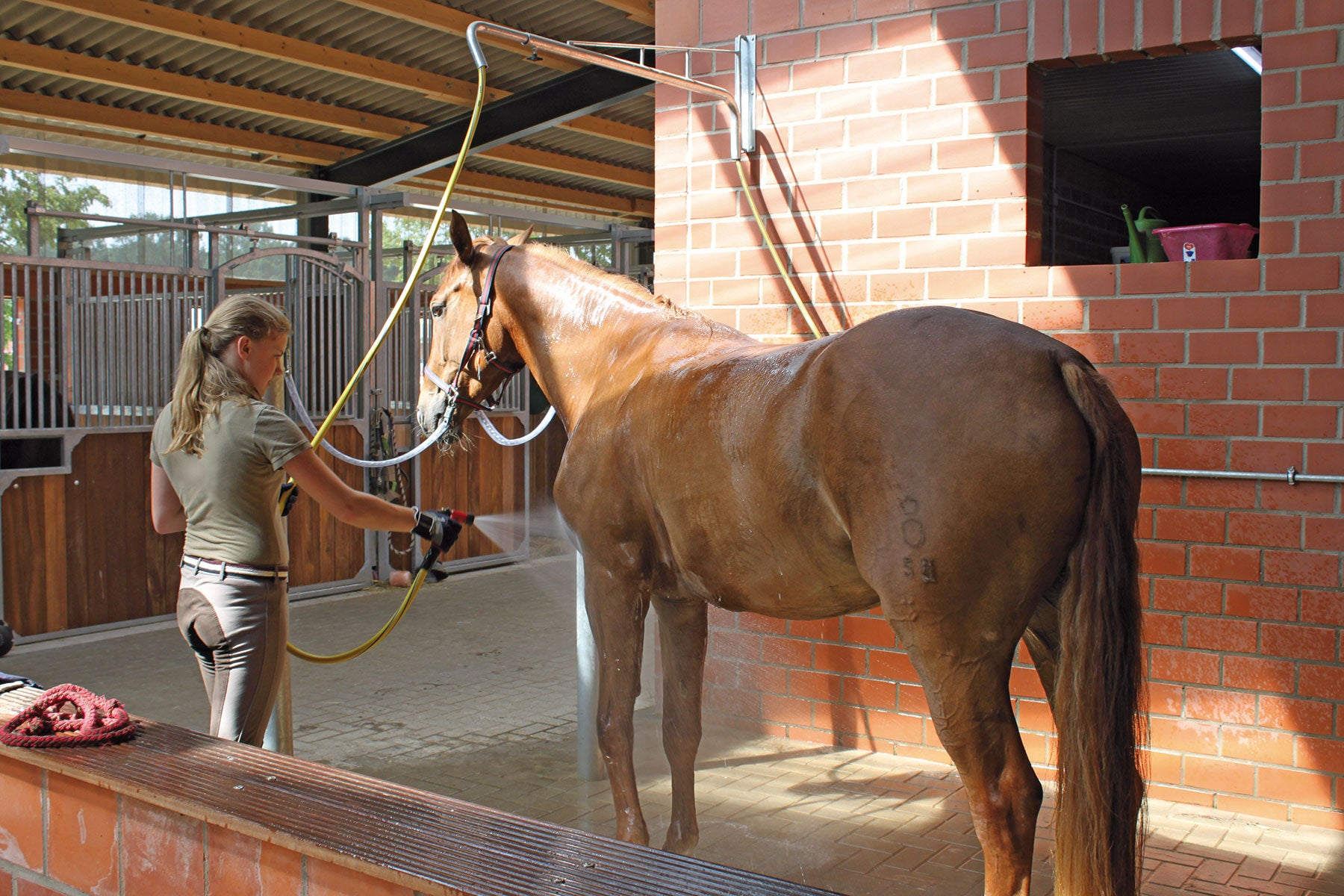 "Horse Spray-off Shower ""Variable"""