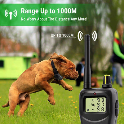 Petrainer -  Pet Remote Control Training Collar at My Pets Store