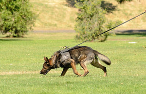 Tracking/Trailing - Manalo K9